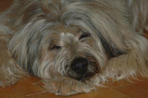 Cranisacrale Omnipathie Hund